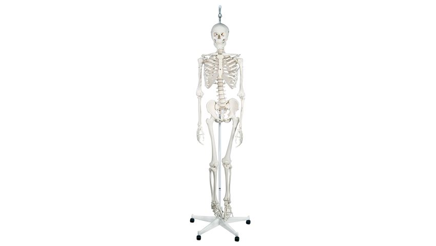 Feldenkrais® Physiological Skeleton